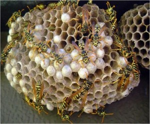 I had Wasps nests like this only minus the wasps
