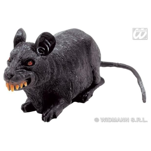 rat from kootation